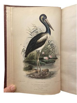 Gatherings of a Naturalist in Australasia; Being observations principally on the animal and vegetable productions of New South Wales, New Zealand and some of the Austral Isles